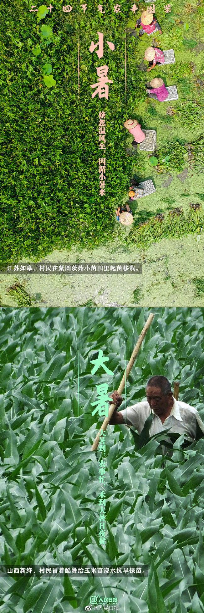 二十四节气农事图鉴