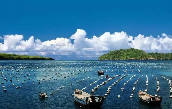 向海图强!山东设立百亿级海洋产业基金