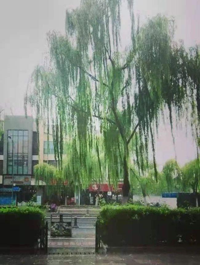 这就是山东·济南丨魏新:县西巷,济南的万丈红尘