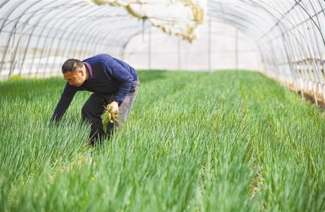 长安:优化产业结构 蔬菜产量不断攀升