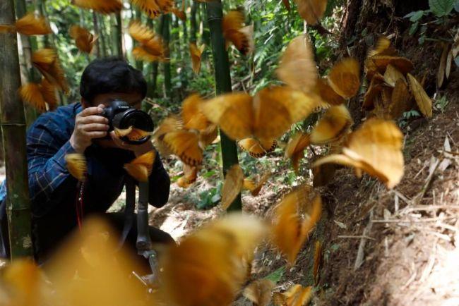 云南超1.5亿只蝴蝶大爆发!网友:大概需要15万个香妃