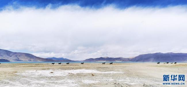 佩枯错:珠峰保护区内最大内陆湖泊