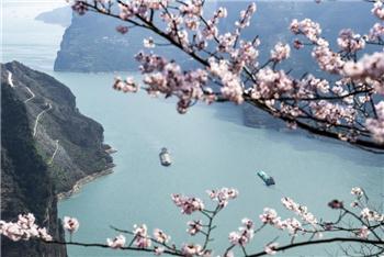 湖北:花開三峽春意濃